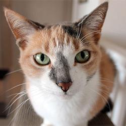 [cat face]
