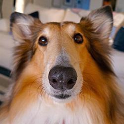 [dog face]