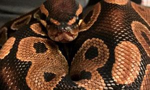 Bucket python