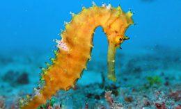 [zoo pathology - seahorse]