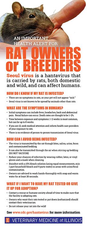 seoul virus