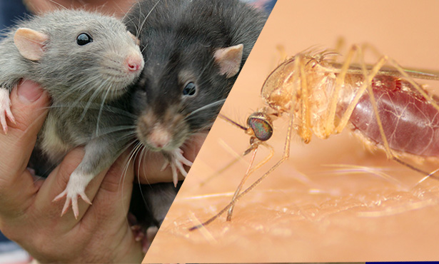 [rats. bugs, public health]