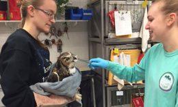 Veterinary Extracurricular Sarah Wright