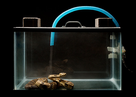 [snake receiving nebulizer treatment]