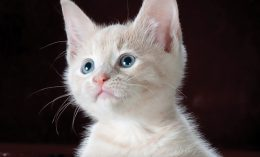 pediatric cat