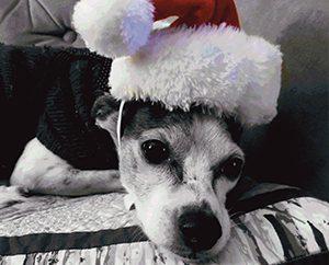 De Peralta's other dog Elliot.