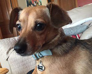 De Peralta's dog T-Rex.