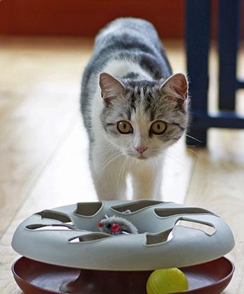 [geriatric pets - cat toy]