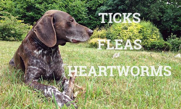 [ticks, fleas, heartworms are major pet parasites]
