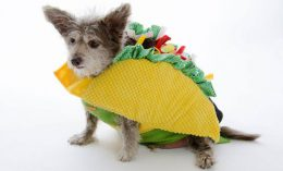 dog in a taco costume