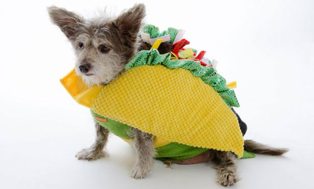 dog in a taco costume