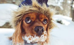 [cute puppy wearing winter hat]