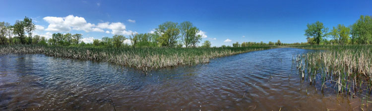 [Marshes in Lake County]
