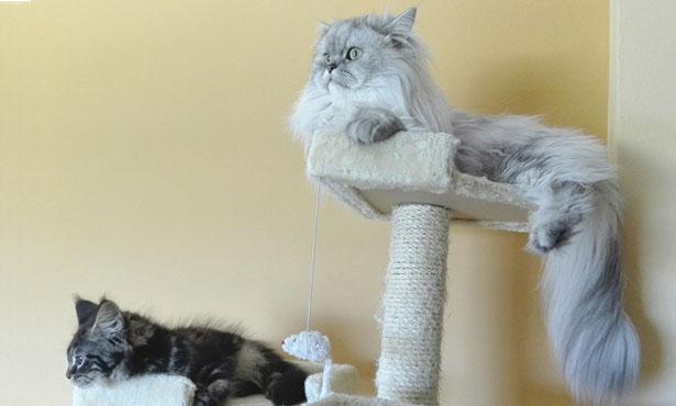 cats perched