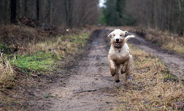 [dog running outside]
