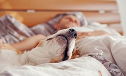 [Nearly one-third of US dog owners sleep with their pet]
