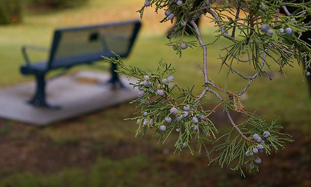 [empty bench]