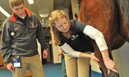 [Dr. Annette McCoy examines a horse's leg]