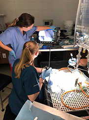 endoscopy training