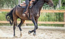 [osteoarthritis in horses]