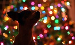 [dog in front of decorated tree]
