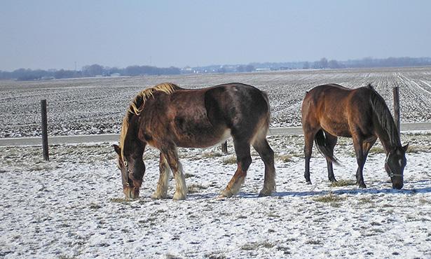 [older horses]