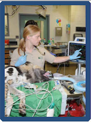 Kim Wojick points to a patient's vitals as she operates.