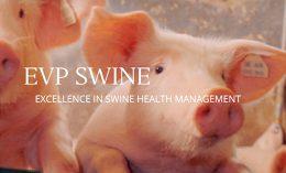 [pigs and EVP Swine]