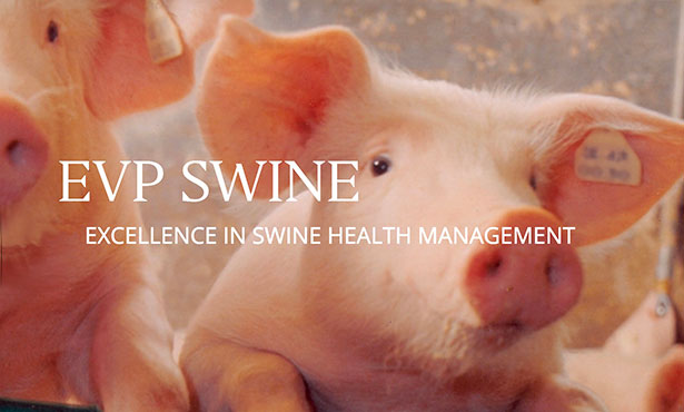 [pigs and EVP Swine]