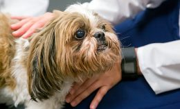 [canine neuro patient at Illinois]