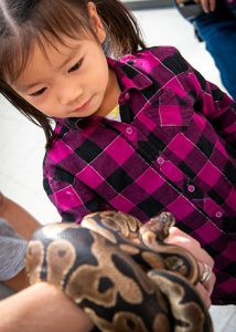 [little girl at open house looking at snake]
