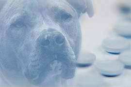 Dog with medicine