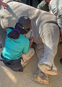 [Taylor Willis assists with rhino procedure]