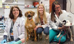 Drs. Caroline Tonozzi, Jenica Haraschak, and Meghan Fick