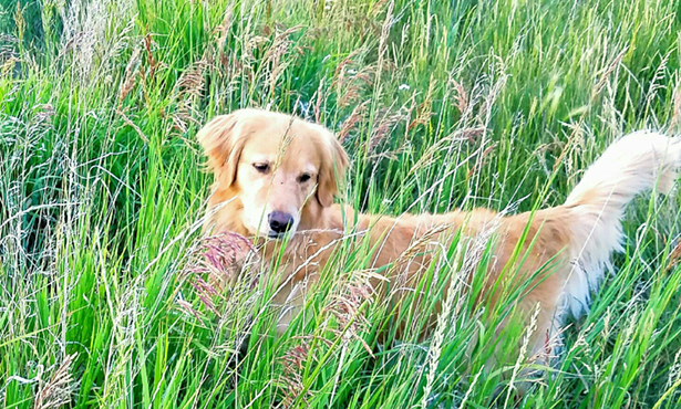 [sophie looking beautiful in long green grass]