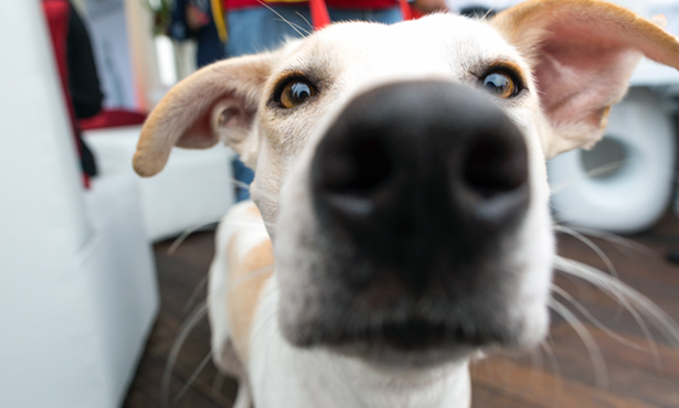 [closeup of dog's nose/face]