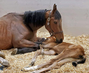 [mare and foal]