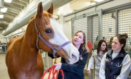 [Dr. Danielle Strahl-Heldreth with a horse and students]