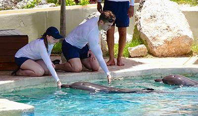 [Sarah Wright dolphin experience]