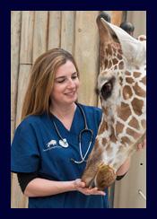 Dr. Dana Lindemann feeds a giraffe.