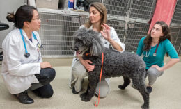 [Dr. Kimberly Selting, with dog, talks to a veterinary student and resident]