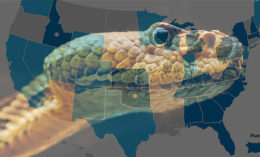 [snake and U.S. map]