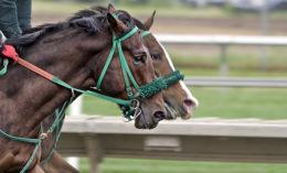 [racehorses]