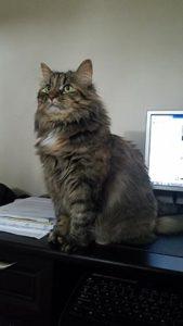 Fluffy cat named Bella
