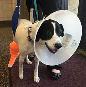 dog Angel wearing cone