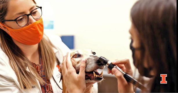 [a still from the video of a dog exam]