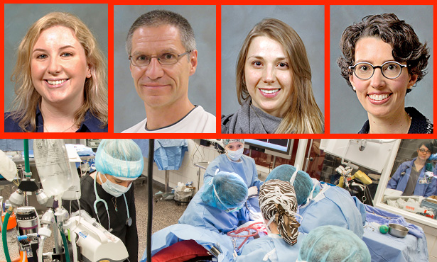 [four anesthesiologists at Iliinois veterinary college]