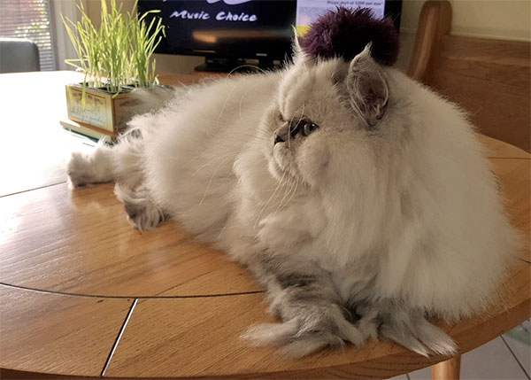 [cat photo submitted with face shape survey]