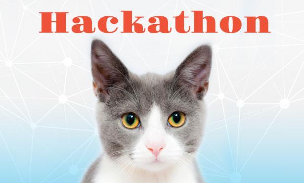 Hackathon cat