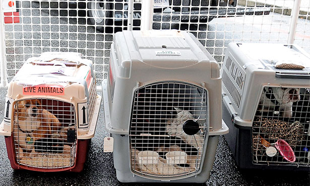 [crated dogs await their travel]